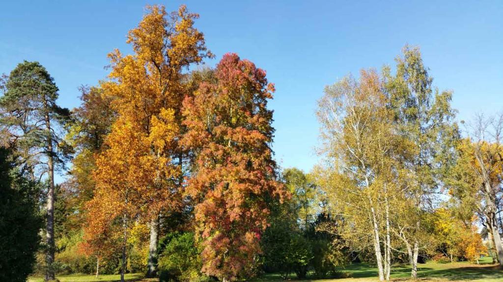 Les arbres remarquables dans les 3 jardins du ch teau de for Jardin anglais chateau fontainebleau